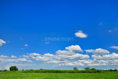 緑の土手と青空に雲の写真素材 [FYI02089510]