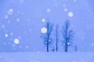 三本の木と降雪の写真素材 [FYI02089529]