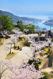 千光寺公園頂上展望台から望むサクラと尾道市街の写真素材 [FYI02089562]