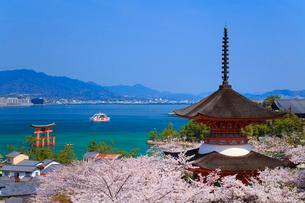 宮島のサクラ 厳島神社大鳥居と瀬戸内海の写真素材 [FYI02089563]