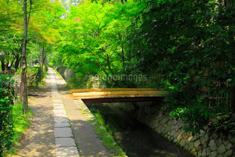 新緑の哲学の道の写真素材 [FYI02089590]