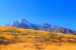 紅葉の草原と八ヶ岳・赤岳の写真素材 [FYI02089634]