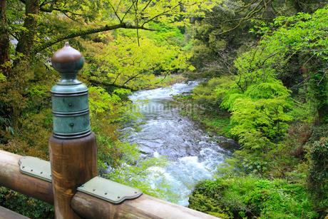 山中温泉 新緑のこおろぎ橋の写真素材 [FYI02089687]