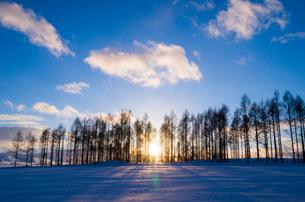 カラマツ林に沈む夕日の写真素材 [FYI02089726]