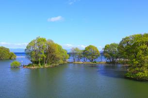 新緑の木と琵琶湖の写真素材 [FYI02089793]