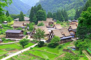 五箇山 相倉合掌集落の初夏の写真素材 [FYI02089800]