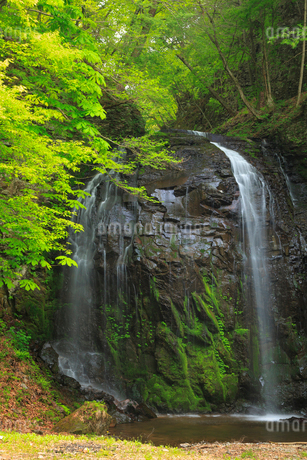 新緑の不動滝の写真素材 [FYI02089830]