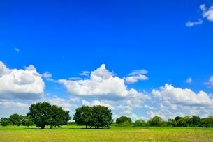 緑の草原と木立に青空の写真素材 [FYI02089834]