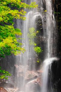 駒ヶ滝と新緑の写真素材 [FYI02089840]