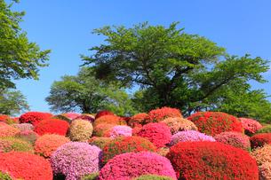 鶴峯公園 ツツジと新緑の樹に青空の写真素材 [FYI02089852]