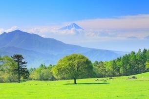 清里高原 新緑の木と富士山の写真素材 [FYI02089941]