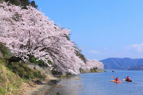海津大崎のサクラと琵琶湖 カヌーの写真素材 [FYI02089950]