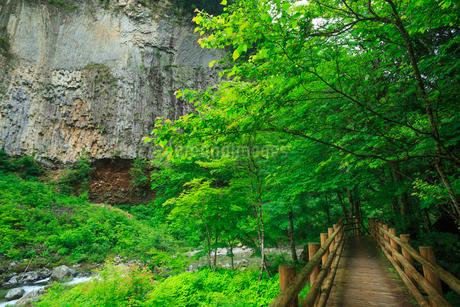 緑の厳立峡の写真素材 [FYI02089952]
