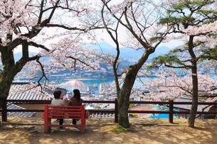 千光寺公園のサクラ 尾道水道と向島の写真素材 [FYI02089975]