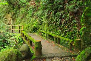 山中温泉 鶴仙峡遊歩道の写真素材 [FYI02089988]
