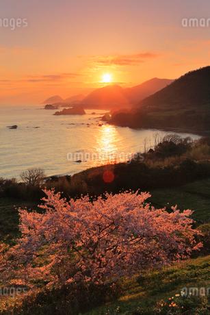 丹後松島のサクラと朝日 日本海の写真素材 [FYI02090004]