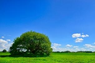 緑の草原と木立に青空の写真素材 [FYI02090041]