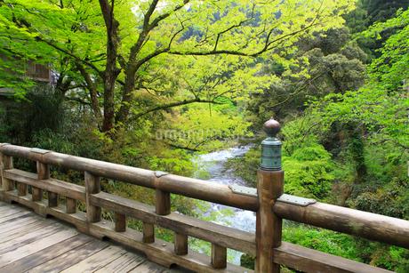 山中温泉 新緑のこおろぎ橋の写真素材 [FYI02090045]