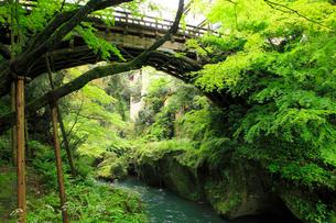 山中温泉 新緑のこおろぎ橋の写真素材 [FYI02090068]