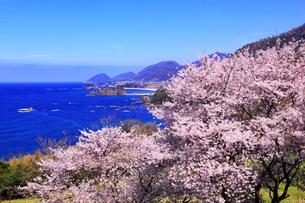 丹後松島のサクラと日本海の写真素材 [FYI02090083]