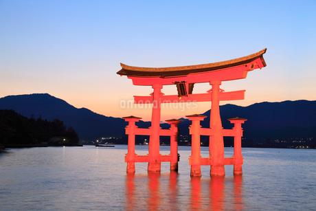 宮島・厳島神社 朝焼けの広島湾とライトアップされた大鳥居の写真素材 [FYI02090121]