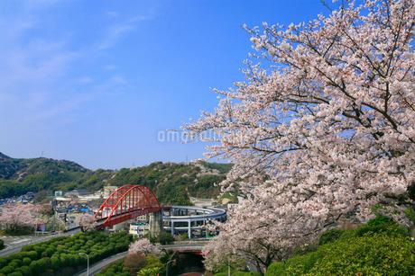 音戸大橋とサクラの写真素材 [FYI02090178]