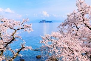 海津大崎のサクラ 琵琶湖と竹生島の写真素材 [FYI02090248]