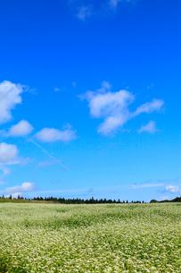 ソバの花と青空の写真素材 [FYI02090318]