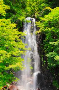駒ヶ滝と新緑の写真素材 [FYI02090342]