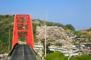 音戸大橋とサクラの写真素材 [FYI02090444]