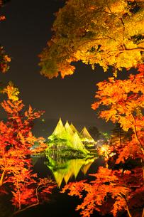 紅葉の兼六園ライトアップの写真素材 [FYI02090494]