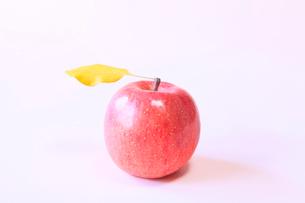 りんご フジの写真素材 [FYI02090512]