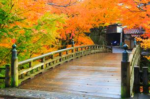 山中温泉 紅葉のこおろぎ橋の写真素材 [FYI02090544]