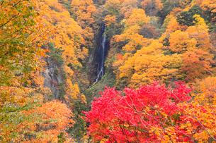 松川渓谷 八滝と紅葉の写真素材 [FYI02090584]