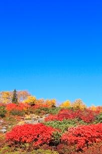 乗鞍エコーラインの紅葉と青空の写真素材 [FYI02090651]