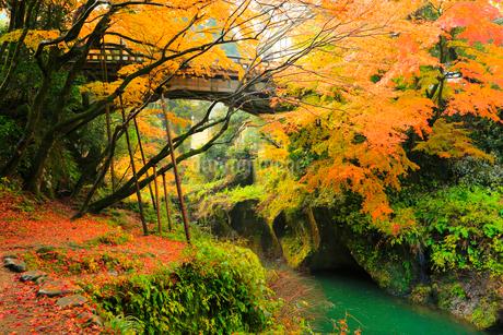 山中温泉 紅葉のこおろぎ橋の写真素材 [FYI02090733]