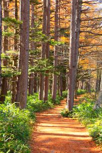 上高地 唐松の紅葉と道の写真素材 [FYI02090737]
