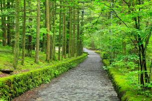 軽井沢別荘地 石畳の道と緑の写真素材 [FYI02090750]