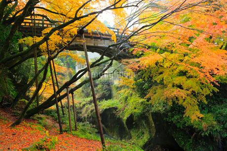 山中温泉 紅葉のこおろぎ橋の写真素材 [FYI02090816]