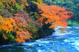 山中温泉 紅葉の鶴仙峡の写真素材 [FYI02090853]
