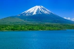 新緑の本栖湖と富士山の写真素材 [FYI02090978]