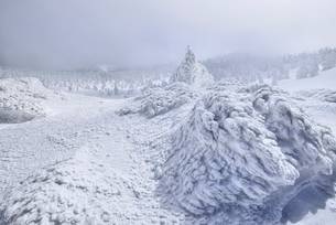 蔵王 地蔵山の樹氷と樹氷原の写真素材 [FYI02090980]