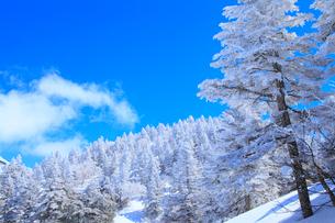 志賀高原の樹氷林の写真素材 [FYI02091001]
