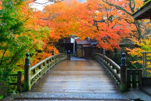 山中温泉 紅葉のこおろぎ橋の写真素材 [FYI02091052]