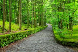 軽井沢別荘地 石畳の道と緑の写真素材 [FYI02091075]