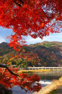 嵐山・渡月橋と紅葉の写真素材 [FYI02091116]