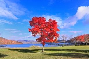 十和田湖畔の紅葉と十和田湖の写真素材 [FYI02091135]