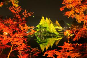 紅葉の兼六園ライトアップの写真素材 [FYI02091161]