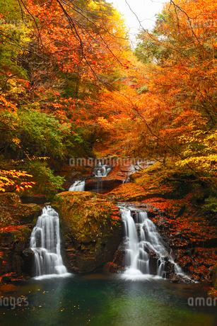 赤目四十八滝・荷担滝と紅葉の写真素材 [FYI02091248]