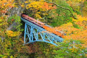 紅葉の黒部峡谷 トロッコ電車と後曳橋の写真素材 [FYI02091274]